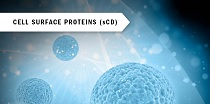 Cell surface proteins (sCD)