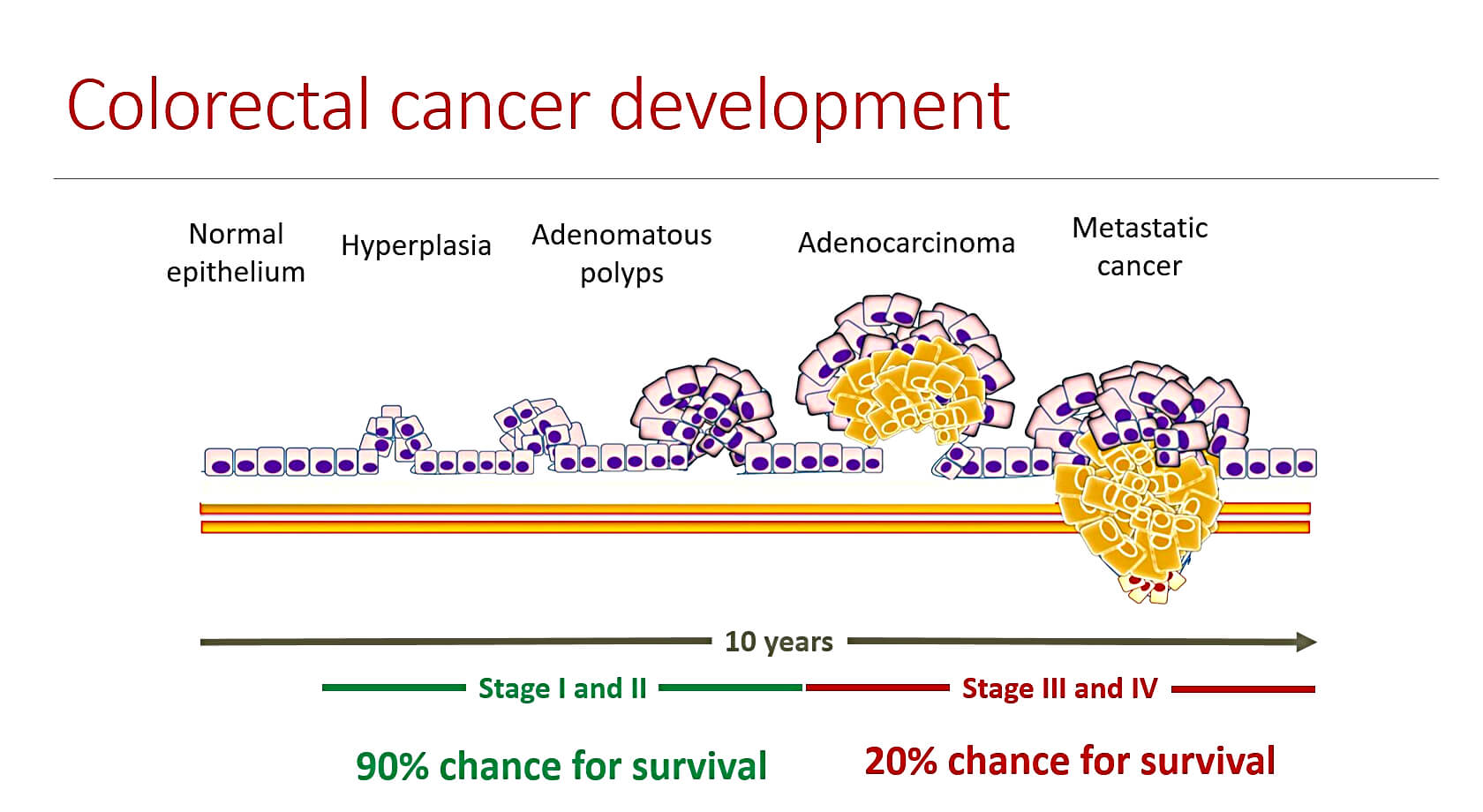 Colorectal Cancer More People Screened More Lives Saved Biovendor
