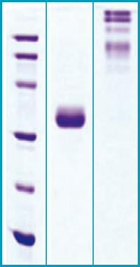 how to prepare 0.1 m phosphate buffer ph 7.4