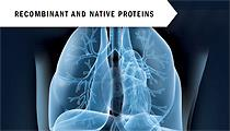 Recombinant and native proteins