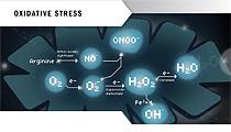 Oxidative stress leaflet